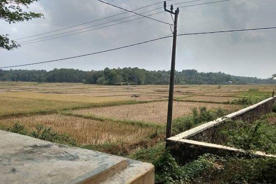 Dua bulan petani Lebak nganggur akibat kemarau panjang
