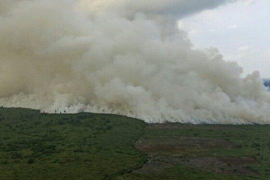 Luas karhutla di Sumsel bertambah 147 hektar