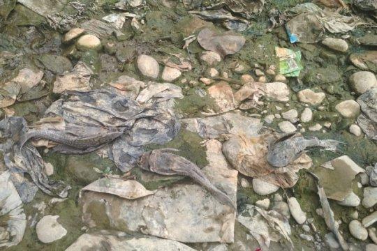 Ombudsman salahkan DLH Bogor soal ratusan ikan mati di Cileungsi