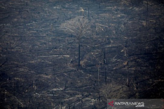 Brazil perintahkan dubesnya tidak berlibur mengingat kebakaran Amazon