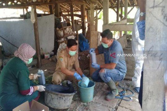 Gunung Kidul lanjutkan pemberian vaksin hewan ternak cegah antraks
