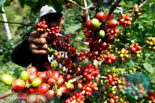 Gravfarm Indonesia mengekspor kopi senilai satu juta euro ke Slowakia