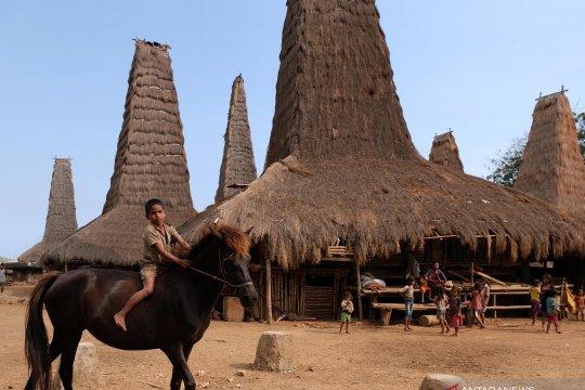 Wisata kampung adat Ratenggaro