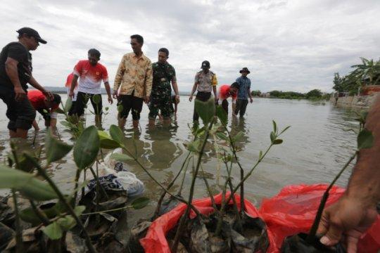PLN tanam 1.000 pohon mangrove di Banda Aceh