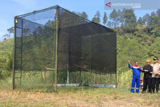 Jaga populasi di Hutan Kamojang,  dua elang dilepasliarkan
