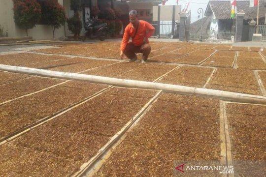 Pemkab Temanggung kawal panen tembakau 2019