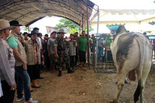 Wagub: populasi ternak sapi Sulteng jauh dari target