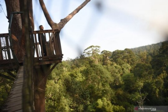 Wisata hutan hujan tropis di kawasan ibu kota baru Page 3 Small