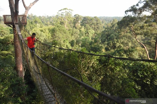 Wisata hutan hujan tropis di Kutai Kartanegara