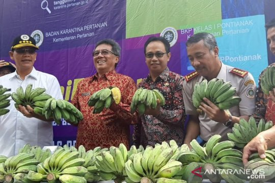Kalbar ekspor perdana pisang kepok ke Malaysia