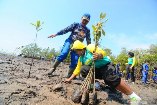 Hutan mangrove Kalsel rusak hingga 70 persen