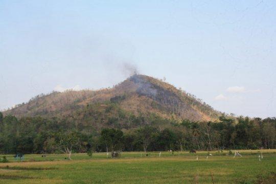 1,5 hektare hutan jati di Trenggalek terbakar