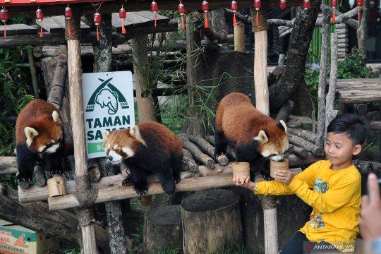 Wisata Istana Panda TSI