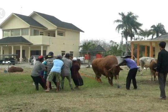 Ma'ruf Amin saksikan pemotongan kurban di Ponpes An Nawawi