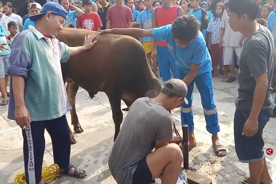 Korban kebakaran Manggarai antusias rayakan Idul Adha