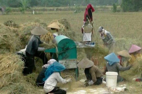 Mentan targetkan Sumsel jadi lumbung pangan terbesar di Indonesia