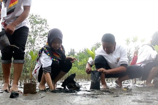 Tanam mangrove untuk jaga kawasan pesisir pantai