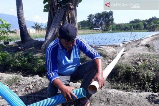 Upaya memulihkan sektor pertanian Sigi di tengah ancaman kekeringan