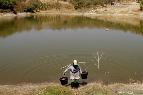 Warga Kupang manfaatkan sisa air embung sirami tanaman sayuran