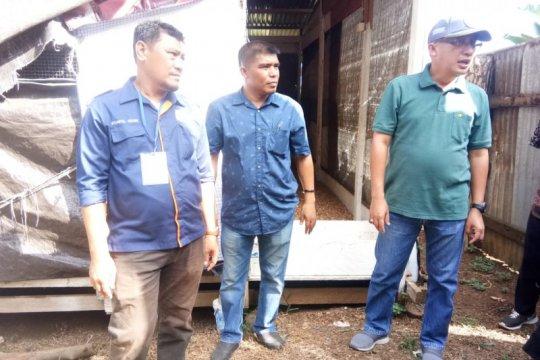 Asosiasi peternakan ayam di Ternate dikukuhkan