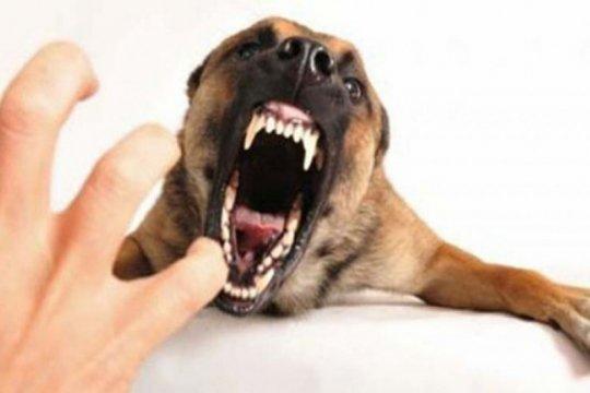 Akibat gigitan anjing rabies, satu anak di Manggarai-NTT meninggal