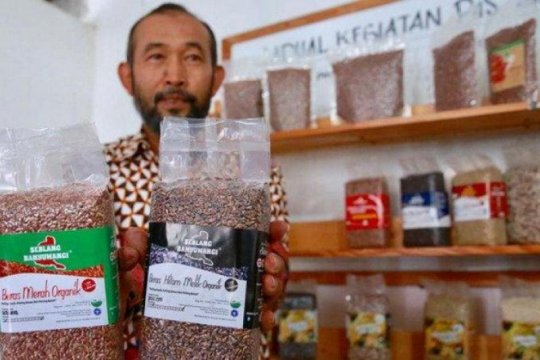 Beras organik Banyuwangi diekspor ke sejumlah negara