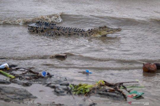 Seorang warga Tulang Bawang tewas diterkam buaya saat cari ikan