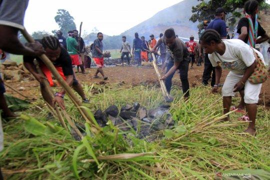 Papua Terkini - Bakar batu untuk perdamaian Papua