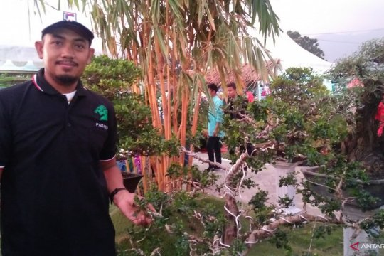 Bonsai Rp50 juta ramaikan Festival Florikultura 2019 di Padang