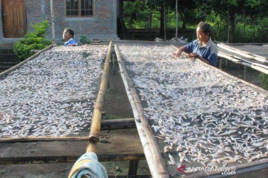 Ikan teri Lembata diminati untuk diekspor ke China