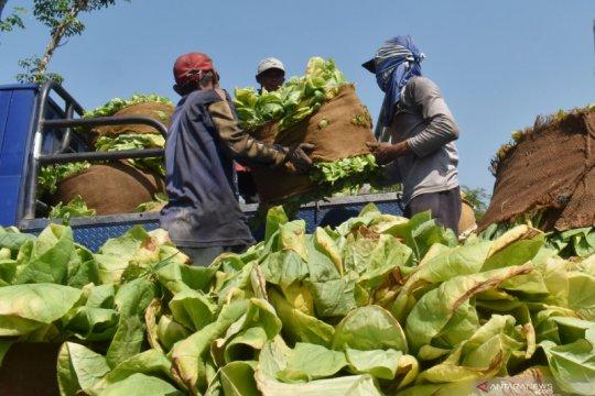 INDEF sebut industri berbasis tembakau alternatif perlu dapat insentif