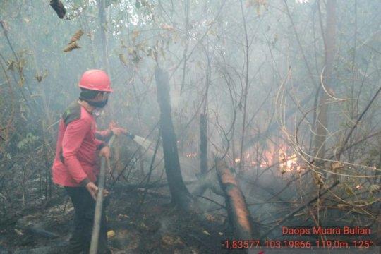 70 hektare kawasan Tahura di Jambi terbakar