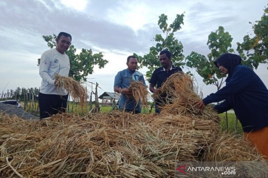 Penggunaan dana desa di Aceh Barat tingkatkan hasil pertanian