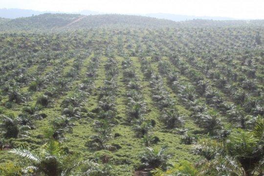 Gubernur minta pemda dukung investasi di Halmahera Selatan
