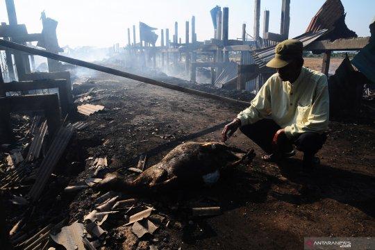 Sebanyak 163 kambing mati terbakar di Kudus
