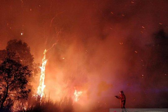 Ratusan warga Australia mengungsi akibat kebakaran hutan