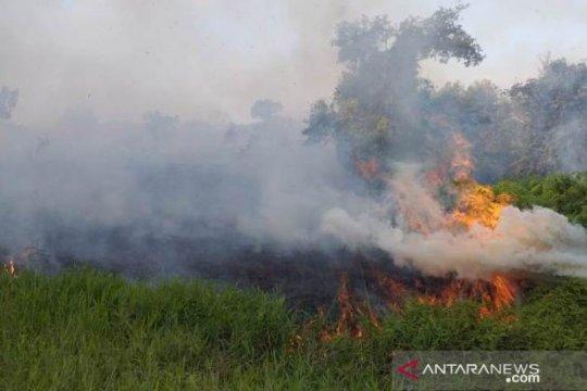 Kebakaran lahan di Penajam Paser Utara meningkat