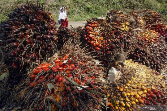 Abaikan kecaman pemerintah, LSM asing ini akan lanjutkan kampanye di Papua