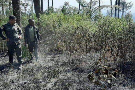 Kebakaran hutan Gunung Merbabu berhasil dipadamkan