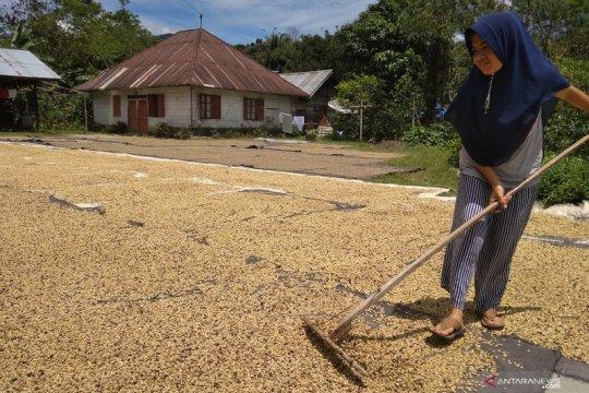 Biji Kopi Arabika bertahan di Rp65 ribu/Kg di Aceh Tengah