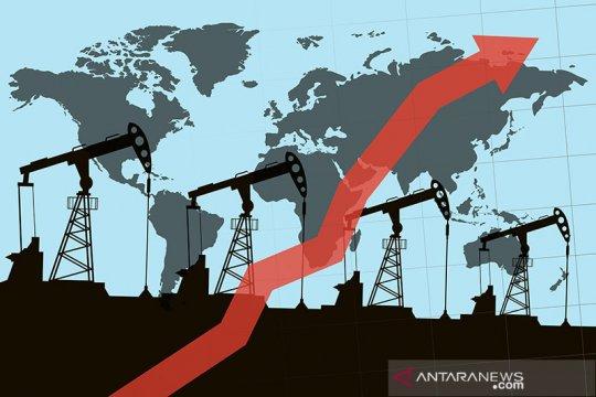 Harga minyak melonjak usai serangan terhadap fasilitas Saudi