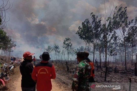 Puluhan hektare lahan inhutani terbakar