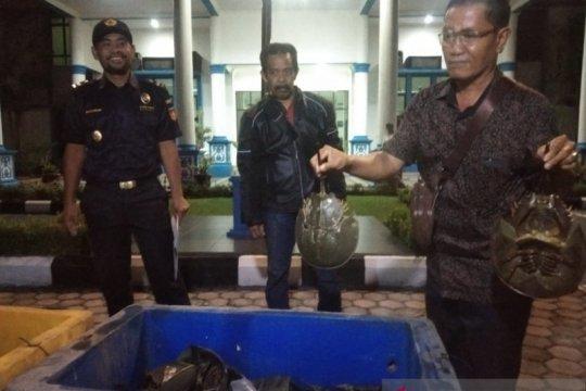 Polda Riau gagalkan penyelundupan 1.500 belangkas ke Malaysia