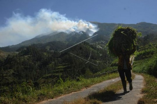 Kebakaran hutan gunung Merbabu Page 2 Small