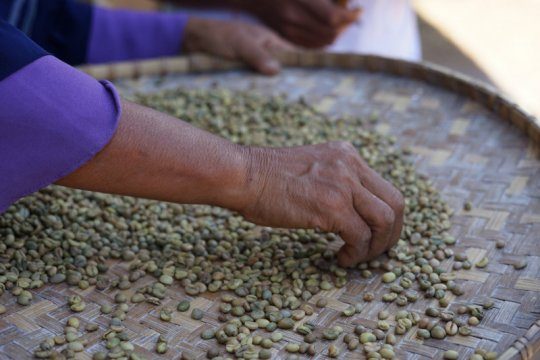 Pemkab Sumbawa Barat dampingi petani kembangkan Kopi Rarak