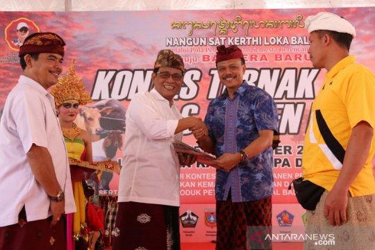Pemprov Bali gelar kontes ternak dan panen pedet