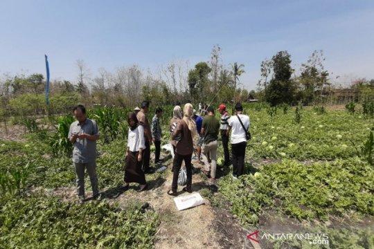 Siasat petani Gunung Kidul memanfaatkan lahan tandus
