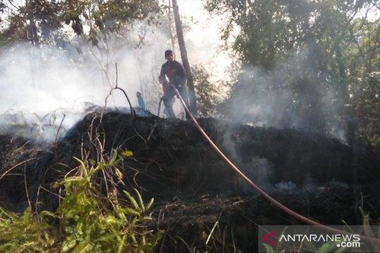 Kebakaran hanguskan tanaman karet warga Rejang Lebong