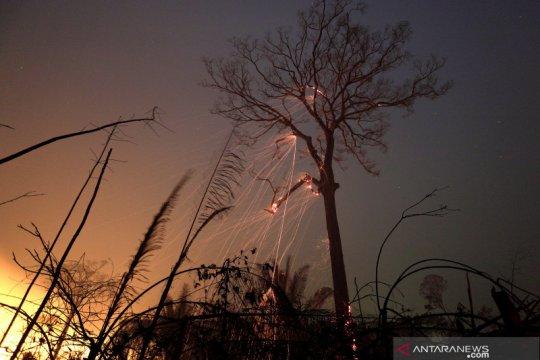 Kebakaran di hutan Amazon Brazil berkurang pada September