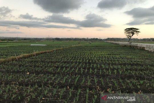 Pascapembangunan BIY, Pemkab Kulon Progo cetak sawah baru